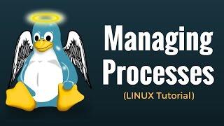 Managing Processes : Linux Tutorial 13