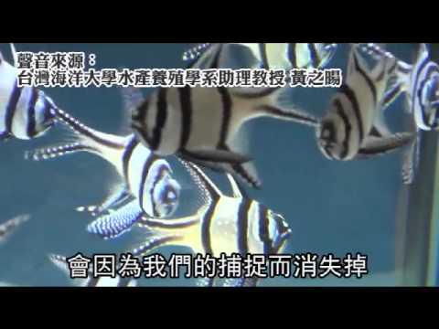 男人照過來 半淡鹹水海龍繁殖成功--蘋果日報 20140725