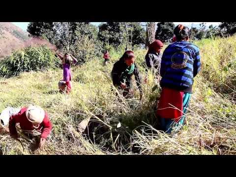 Women Empowerment Program in Nepal - Volunteers Initiative Nepal