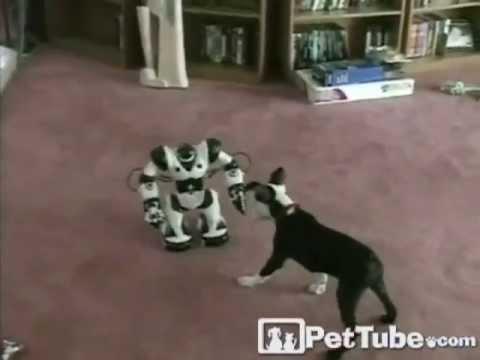 Puppy vs. Robot- PetTube