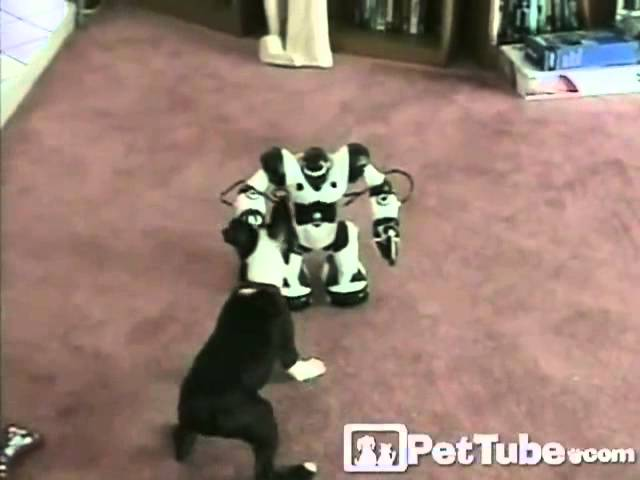 Puppy vs. Robot- PetTube