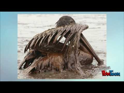 BP Oil Spill History