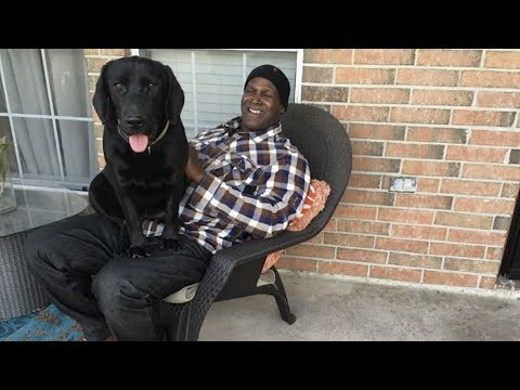 Man Wrongfully Convicted of Rape Reunites With Prison Dog After Serving 38 Years from YouTube · Duration:  1 minutes 21 seconds