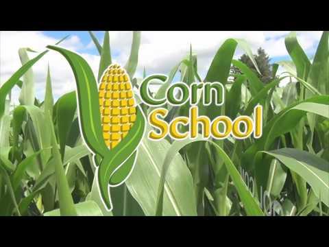 Corn School  - Cost Of Production