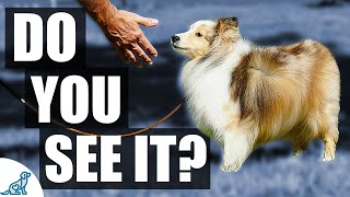 Dealing With Dog Anxiety  What It Looks Like & What To Do