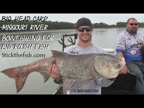 Bow fishing Missouri River BIg Head CARP  Learn how we bowfish for huge rough fish