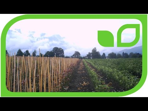 We are proud producers and nurserymen