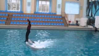 Супер трюк с дельфинами