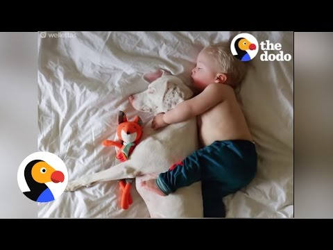 Dog And Baby Best Friends Love To Nap Together | The Dodo