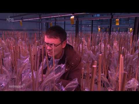 NDR: N3 Nordmagazin am 22.05.2020   »Roggen: Getreide der Zukunft?«