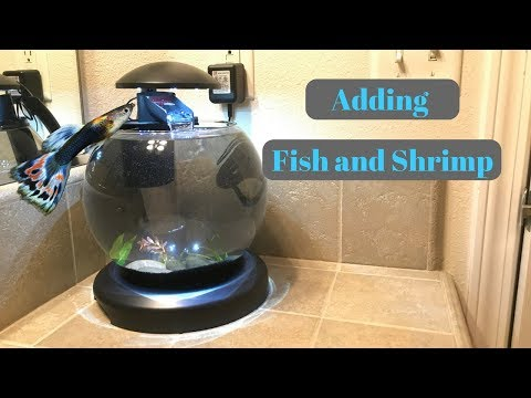 Adding Fish to the Waterfall Globe