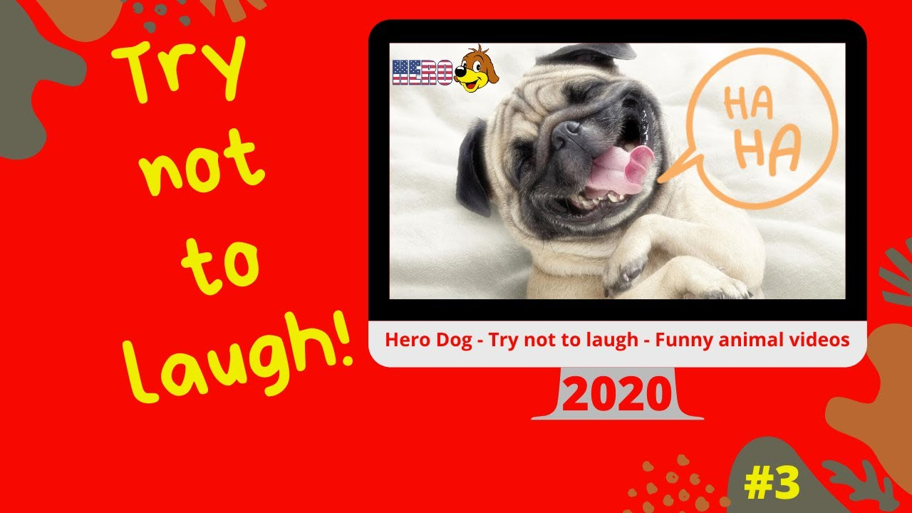 Hero Dog - Try not to laugh - Funny animal videos 2020 #3