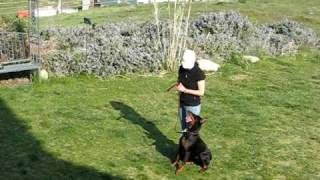 Dog Rally Obedience Training For Novice A  001.avi