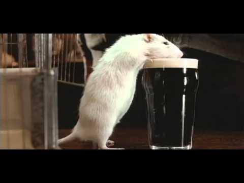 Мистер крыс ...