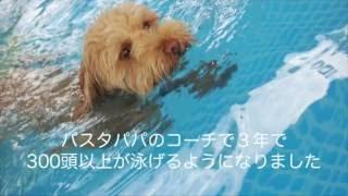 わんのはな楽天市場店 http://www.rakuten.ne.jp/gold/ecoplan21/ わん...