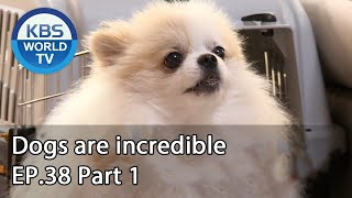 Dogs are incredible EP.38 Part 2 | KBS WORLD TV 200812