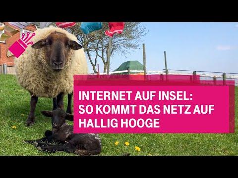 Social Media Post: Internet auf Insel: So kommt das Netz auf Hallig Hooge