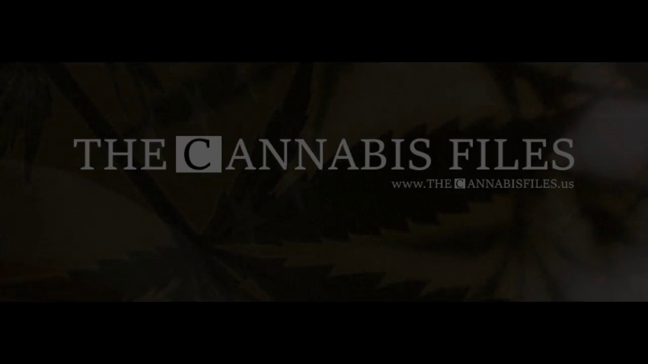 The Cannabis Files #004 feat James Meissner
