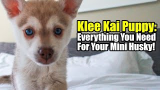 Alaskan Klee Kai Puppy Essentials | How To Prepare For Your Mini Husky