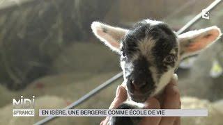ANIMAUX : En Isère, une bergerie comme école de vie