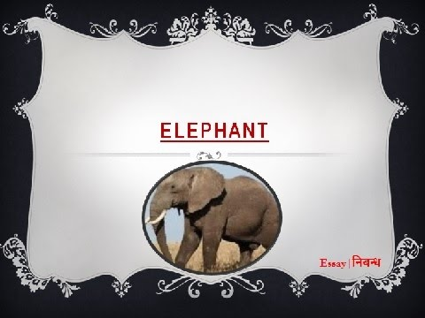 Видео Essay of elephant