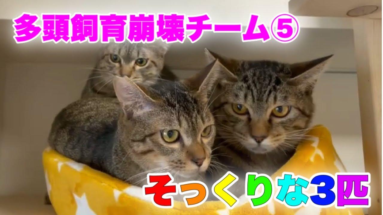 いざ!譲渡会に出場予定の多頭崩壊チーム⑤【Rescued cats】