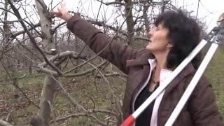 Repeat youtube video Kako pravilno orezati jabuku   U nasem ataru 519