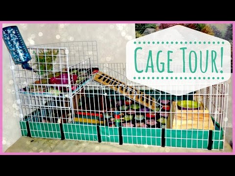 Guinea Pig Cage Tour!