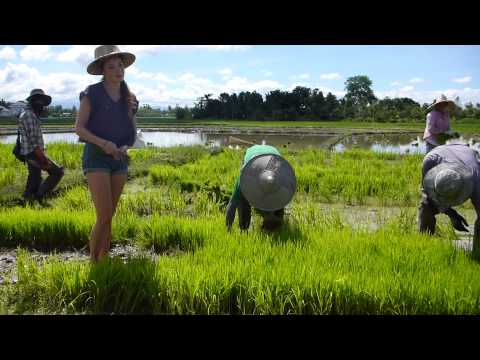Chiang mai Thai Secret Cooking Class, Organic Rice Farm Part 4