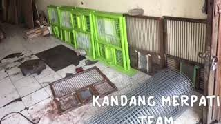 Video Kandang merpati download MP3, 3GP, MP4, WEBM, AVI, FLV Oktober 2018
