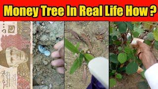 Money Tree In Real Life How? | Paiso Wala Darakht | Money Maker Tree