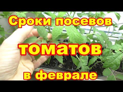 Когда буду сеять томаты в феврале
