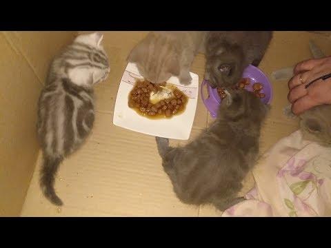 Чем кормить котенка в 1, 2, 3, 4 МЕСЯЦА