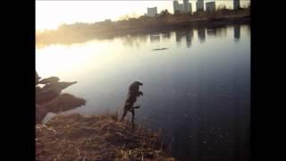 家ではこたつから出ない寒がりサムの趣味は冬の川への飛び込み http://g...