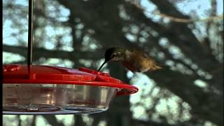 Why are hummingbirds still hanging around?