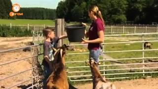 Das Haustiercamp   Staffel 1, Folge 2