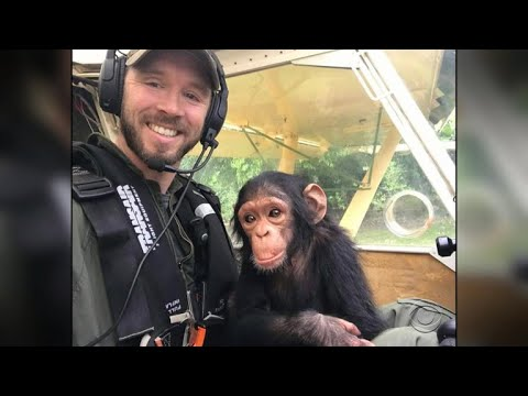 Pilot rescues baby chimpanzee from poachers in Africa