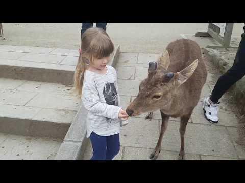 Japan Trip to Nara. 2017
