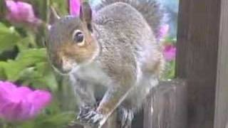 My Birdfeeders - Sparrows, Starlings And A Pesky Squirrel !