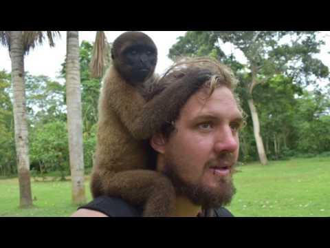 Amazon jungle Iquitos