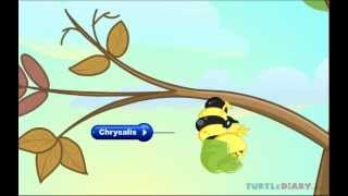 Learn All About Butterfly Life Cycle At Www.turtlediary.com