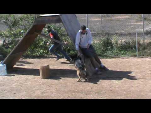 Εκπαιδευση σκυλων - Defence work,Vox - k9training.gr