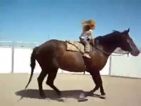 Маленькая всадница талант или лошадь гений. Вам решать. Мы за маму супер-тренера!