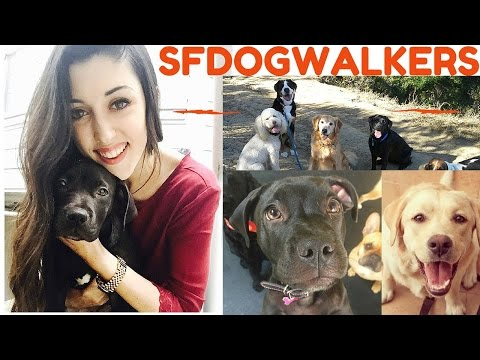 Professional Dog Walker San Francsico