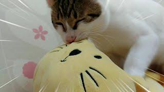 고양이의 특별한 행동 꾹꾹이를 아시나요? Special behavior of cats