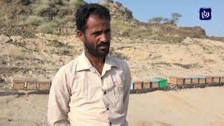 العسل اليمني  يعاني مرارة الحرب في البلاد (23/11/2019)