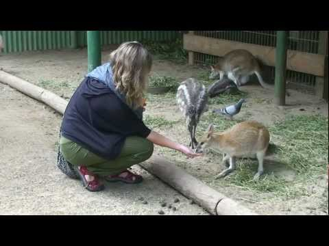 Featherdale Wildlife Park - Sydney - Australia