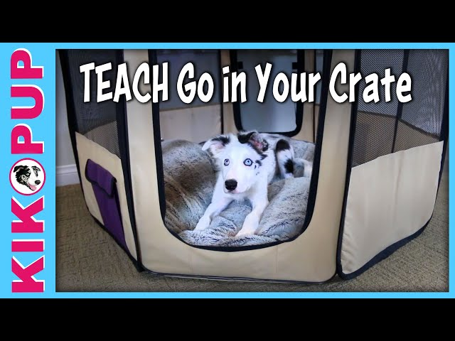 Teach go in your crate - crate training pen training