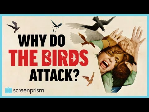 The Birds: Why Do The Birds Attack?