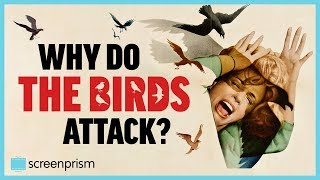 the-birds-why-do-the-birds-attack